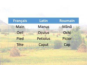 Liste no1 de mots en français, latin et roumain